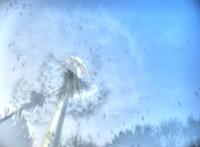 1003316432-alergia-dmuchawiec-3.jpg